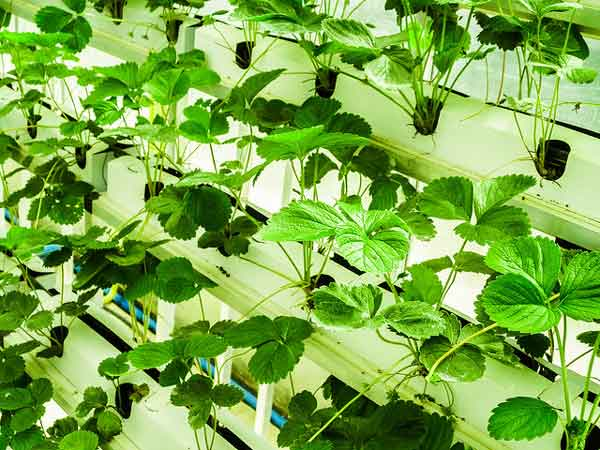 hydroponic grow tray can be produced from calcium carbonate masterbatch and resin